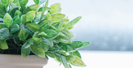 Best Plants to Grow in a Sunroom